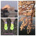 Cherry Blossom Run (Saucony Kinvara 4 Review)
