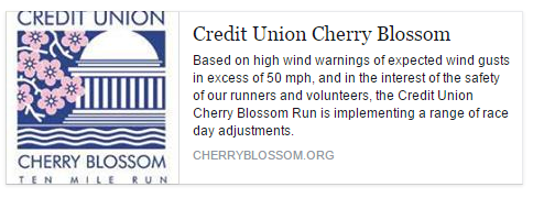 Cherry Blossom Wind Warning