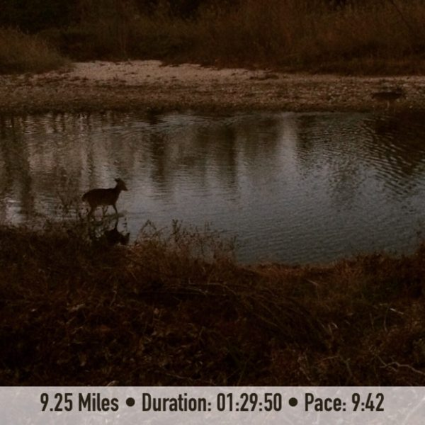 Runchat Hunt Wildlife